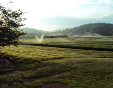 Summer irrigation