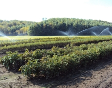 Fall irrigation