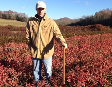 Fothergilla Mt. Airy liners